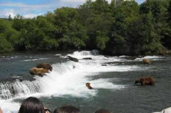 5_bears_at_falls-398x264